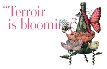 terroir is blooming