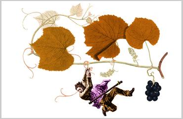 """fall in wine"" — online wine o'clock sale | november 10, 2020 Baghera/wines"